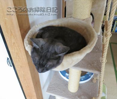 hanmokkuribu011-07-2012.jpg