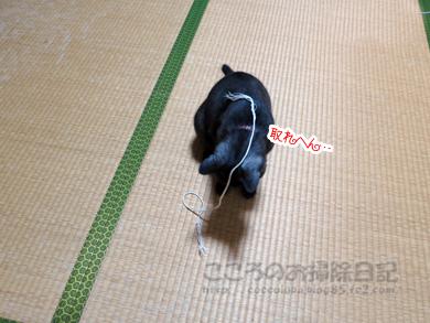 himoribu001-08-2012.jpg
