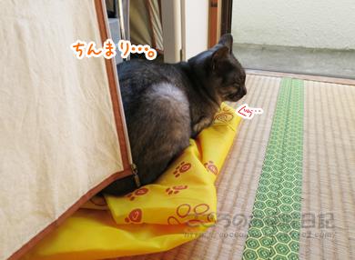 hinatabokkoribu003-10-2012.jpg