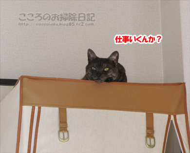 hiruneribu002-2012.jpg