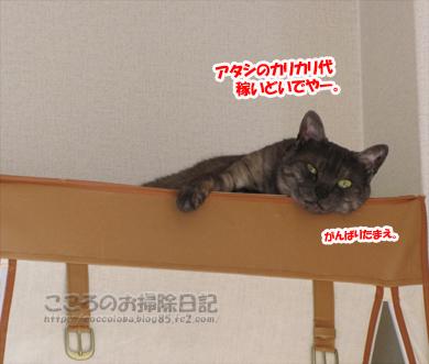 hiruneribu003-2012.jpg
