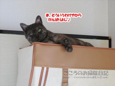 hiruneribu004-2012.jpg