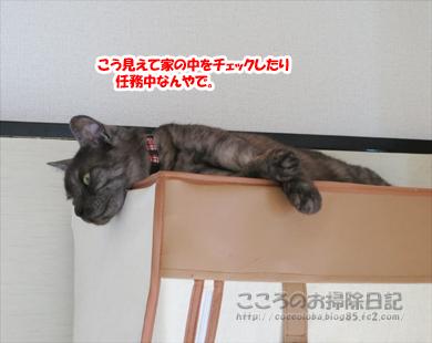 hiruneribu005-2012.jpg