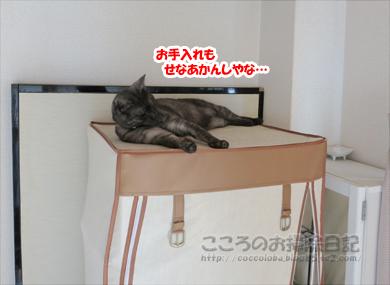 hiruneribu006-2012.jpg