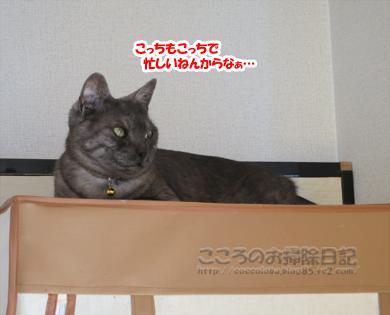 hiruneribu007-2012.jpg