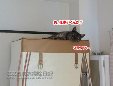 hiruneribu008-2012.jpg