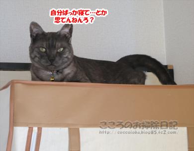 hiruneribu009-2012.jpg