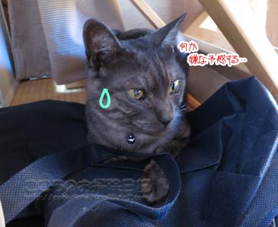 isushitaribe-09-2012.jpg