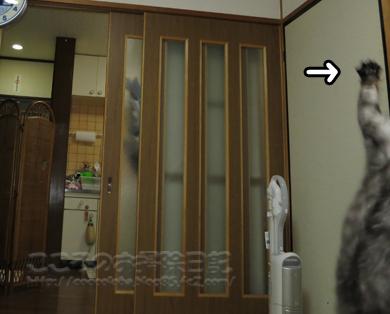jararibu1-2012.jpg