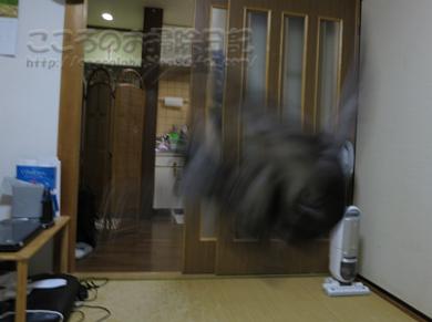 jararibu2-2012.jpg