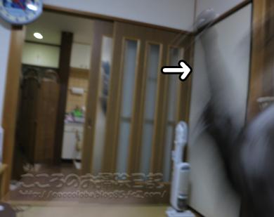 jararibu4-2012.jpg
