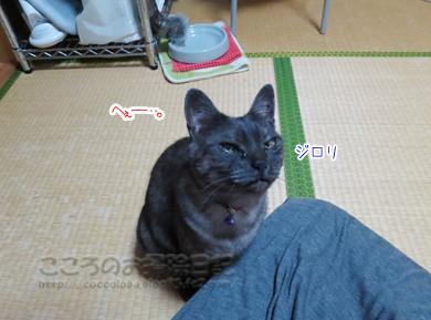 jarashiribu003-09-2012.jpg