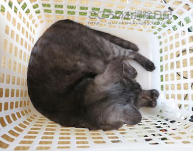 kagoribu001-07-2012.jpg