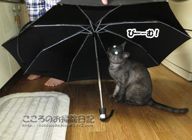 kasatoribu001-10-2012.jpg