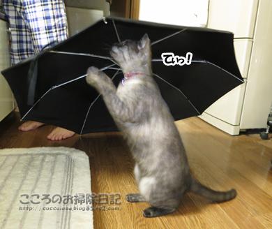kasatoribu002-10-2012.jpg