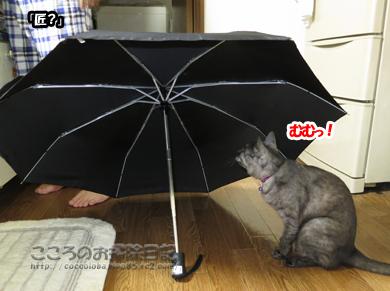 kasatoribu003-10-2012.jpg