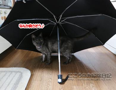 kasatoribu004-10-2012.jpg