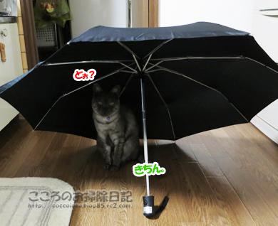 kasatoribu005-10-2012.jpg