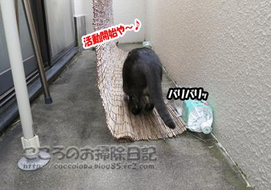 katudoukaishiribu-2012.jpg
