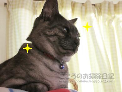 kirakiraribu001-09-2012.jpg