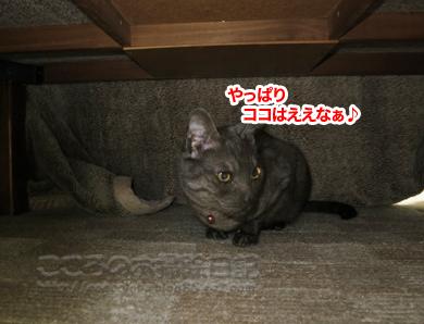 kotatsuribu002-2012.jpg
