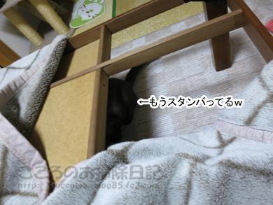 kotatsuribu003-2012.jpg