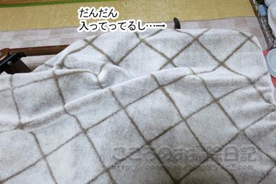 kotatsuribu004-2012.jpg