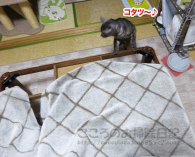 kotatsuribu005-2012.jpg