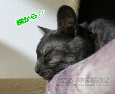 kyakushitsuribu004-08-2012.jpg