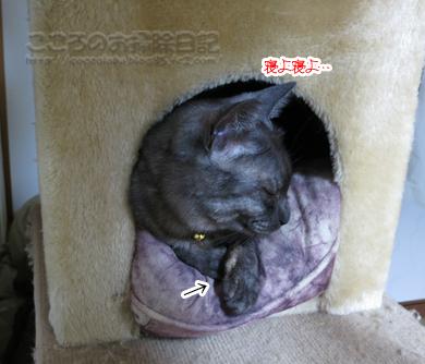 kyakushitsuribu009-08-2012.jpg