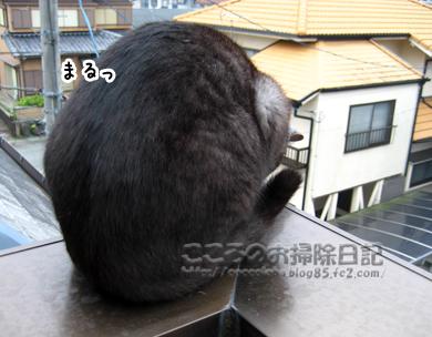 maruribu-2011_20111128234019.jpg