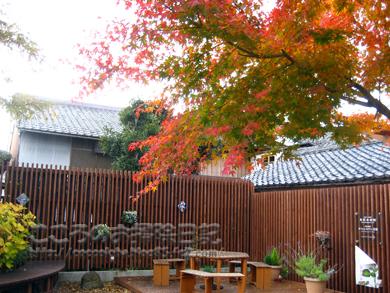 momiji1-2011.jpg