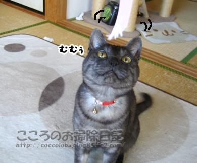 mumuribu12-2011.jpg