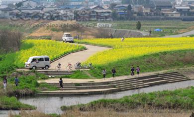 nanohana5-2012.jpg