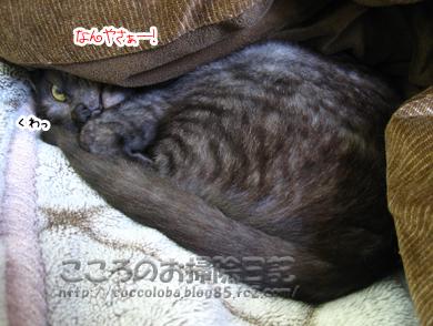 neruribu3-2011.jpg