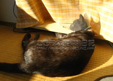 nukuiribu3-2011.jpg