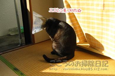 nukuiribu5-2011.jpg