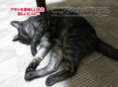 oishiribu1-2012.jpg