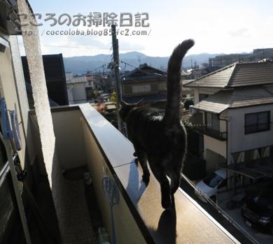 osotoribu-2011_20111217205322.jpg