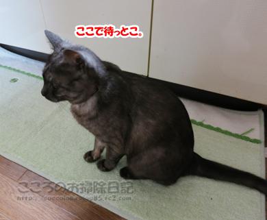 papamachiribu001-07-2012.jpg