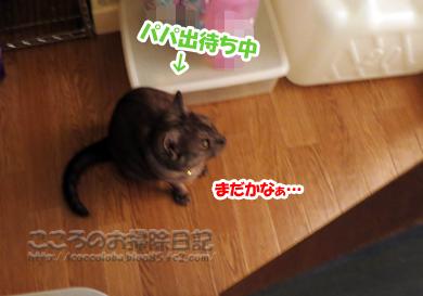 papamachiribu002-07-2012.jpg
