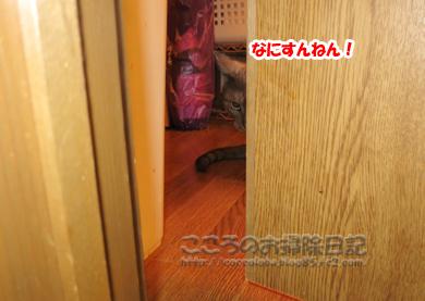 papamachiribu003-07-2012.jpg