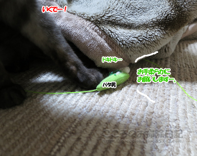 pataotoribu002-10-2012.jpg