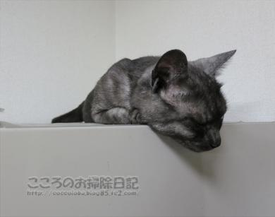reizoukoribu002-2012.jpg