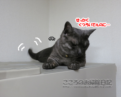 reizoukoribu003-2012.jpg