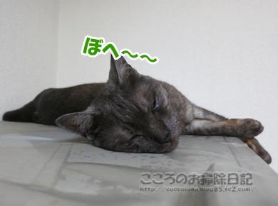 reizoukoribu004-2012.jpg