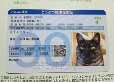 ribuhoken2012.jpg