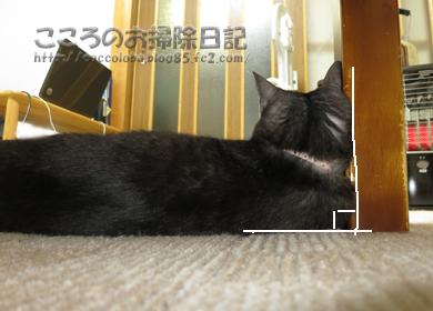 ribukakudo-2012.jpg