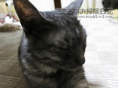 ribumayuge2-2012.jpg