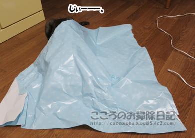 ributohimo002-2012.jpg